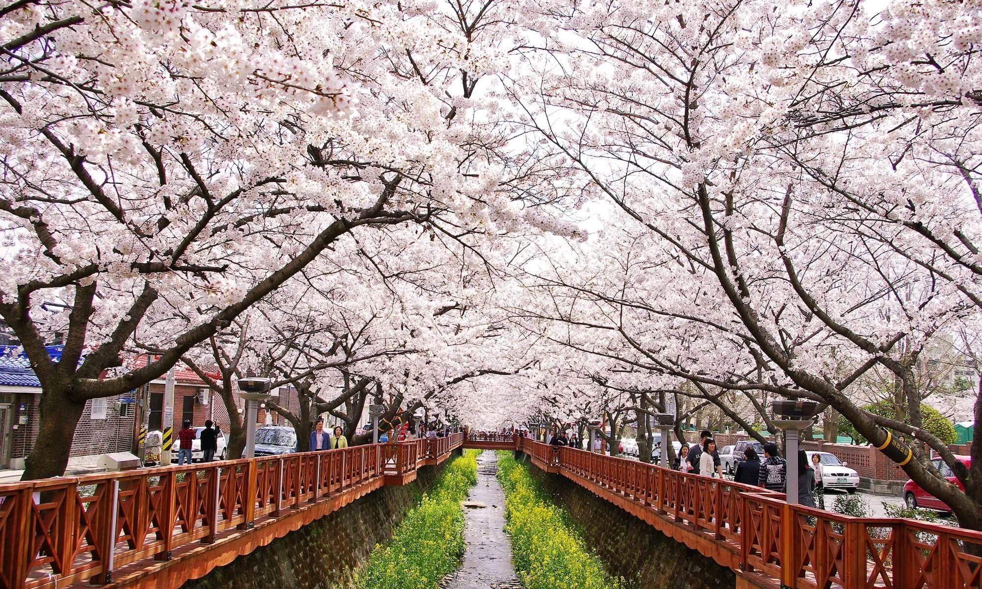ทัวร์เกาหลี 4 ฤดู ฤดูไหนใช่ที่สุดสำหรับคุณ