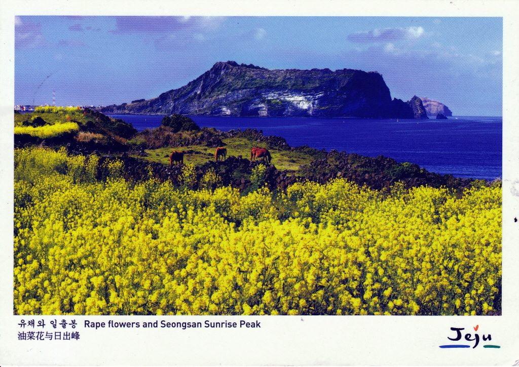 jeju postcard